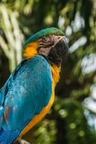 A close-up of a parrot sitting on a bench. royalty free stock photos
