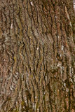 Close up part of tree bark Royalty Free Stock Images