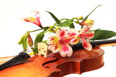 A close-up part of violin and some flowers. A wooden violin and some flowers over white Royalty Free Stock Image
