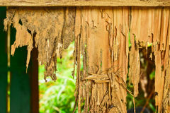 Close up part of a wood decay. From termites eat Stock Photos