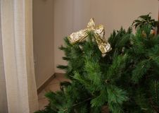 Particular Christmas tree with gold ribbon. Close up particular Christmas tree with gold ribbon with background Stock Photography
