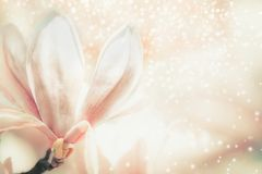 Close up of pastel colors magnolia flower . Springtime. Nature background Stock Photography