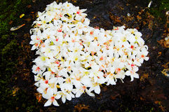 Close-up patchwork of Fordii (Tung) tree flower (Heart shape) Stock Photo