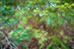 Close up pattern Barb Wire Royalty Free Stock Photos