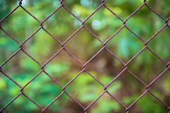 Close up pattern Barb Wire Royalty Free Stock Images