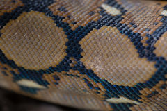 Close up Pattern Boa Snake skin abstract textured Royalty Free Stock Photography