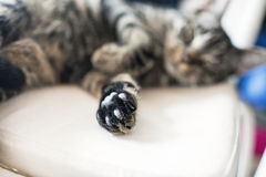 Close-up of paw from young tabby cat lying on white chair. Stock Photos