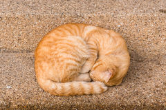 Close up peaceful orange red male cat sleeping on outdoor ground in cold weather day Royalty Free Stock Photography