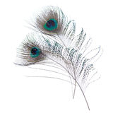 Close-up peacock feathers Royalty Free Stock Images