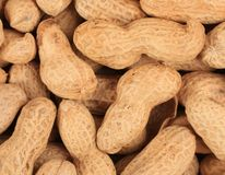 Close up of peanuts bunch. Stock Image