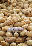 Close up a peanuts seeds Royalty Free Stock Image