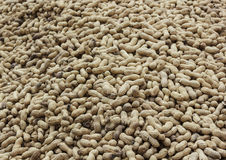 Close-up of peanuts Stock Photography
