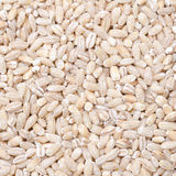 Close-up of  pearl barley background Stock Image