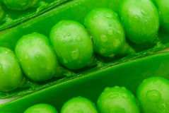 Close up of peas in pod Royalty Free Stock Images