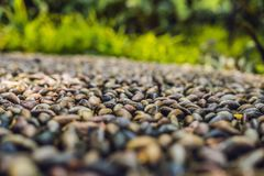 Close up of pebble stones on the pavement for foot reflexology,. Selective focus royalty free stock image