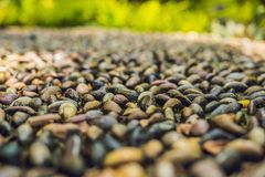 Close up of pebble stones on the pavement for foot reflexology,. Selective focus stock photos