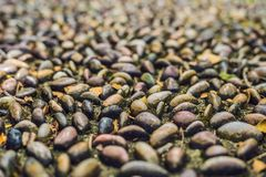 Close up of pebble stones on the pavement for foot reflexology, selective focus.  royalty free stock image
