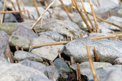 Close up of pebbles and reed straw at the coast Stock Photography