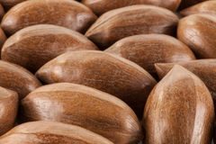 Close up of pecan nuts. A close up of loose unshelled pecan nuts royalty free stock photos