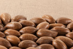 Close up of pecan nuts. A close up of loose unshelled pecan nuts with space for text royalty free stock photo