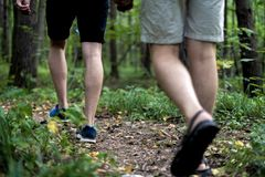 Close up people legs walking in autumn forest on a camping hiking trip stock photography