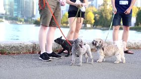 Close up people walking for dog near river shore stock video footage