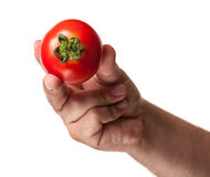 Close up with a perfect tomato Stock Images