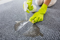 Close-up Of Person Hand Spraying Detergent On Carpet. Person Hand Wearing Gloves Spraying Detergent On Grey Carpet Or Rug To Remove Stain Stock Image