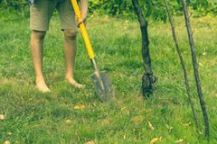 Close up person legs work in garden and digging using shovel s stock photo