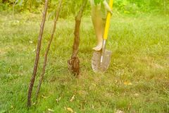 Close up person legs work in garden and digging using shovel s stock photography