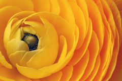 Close-up of the petals of a yellow flower Royalty Free Stock Images