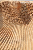 Close up of the Phoenix carving Hierapolis Royalty Free Stock Image