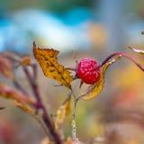 Close-up photo of autumn leaves. Close-up photo of colorful autumn leaves Stock Photo