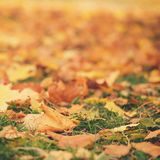 Close up photo of autumn leaves on the ground. October Stock Photography
