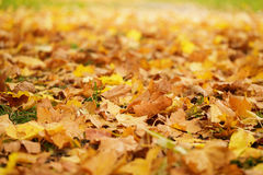 Close up photo of autumn leaves on the ground. October Royalty Free Stock Photos