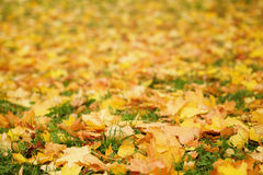 Close up photo of autumn leaves on the ground. October Royalty Free Stock Photography