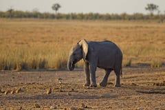 Close-up Photo of Baby Elephant Royalty Free Stock Photos