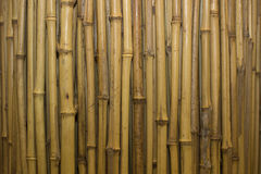 Close-up photo of bamboo isolated on the white background Royalty Free Stock Images