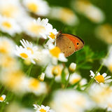 Close-up photo of the beautiful butterfly. stock image