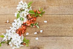 Close-up photo of Beautiful white Flowering Cherry Tree branches. Wedding, engagement or betrothal concept on vintage wooden backg. Round. Top view, greating Stock Image