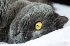Close Up Photo Of Black Cat Royalty Free Stock Photos