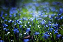 Close Up Photo of Blue Petaled Flower during Daytime Stock Photography