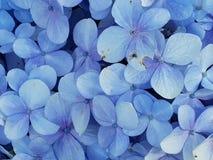 Close-up Photo of Blue Petaled Flowers Stock Image