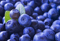Close up photo of blueberries. Fresh ripe juicy bilberries, bright autumn colorful background. Concept of healthy diet with berrie. Close up photo of blueberries stock photography