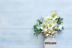 Close-up photo A bouquet of fresh spring hellebore flowers in a white vase royalty free stock photo