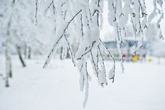 Close-up photo of branches covered with snow. Winter wonderland.  stock photos