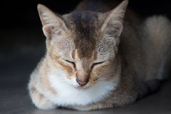 Close-Up Photo of Brown Tabby Cat Royalty Free Stock Photography