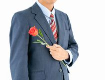 Businessman in suit with red rose on white Royalty Free Stock Photo