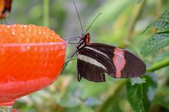 Beautiful Butterfly Macro Photography stock images