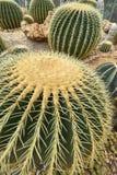Close up photo of cactus Stock Photos